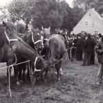 1953 Pferdehandel auf dem Rheder Markt