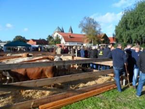 Fotos Pferdemarkt 2013 (1)