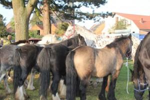 IMG_0265 mehrere Pferde und Kirche