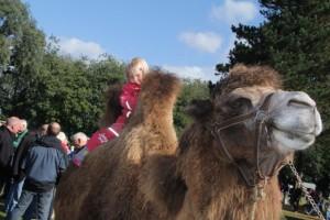 IMG_0422 Fenna auf Kamel 2