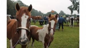 Ems-Zeitung - Pferde aller Altersklassen wurden praäsentiert