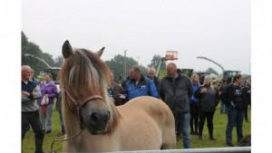 Ems-Zeitung - vor dem Kauf wird ein Pferd kritisch beäugt