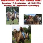Rheder Markt 2017 - Kamelreiten für Jedermann Sonntag 17.09. u Montag 18.09