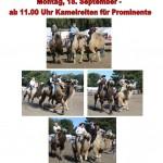 Rheder Markt 2017 - Kamelreiten für Prominente Montag 18.09